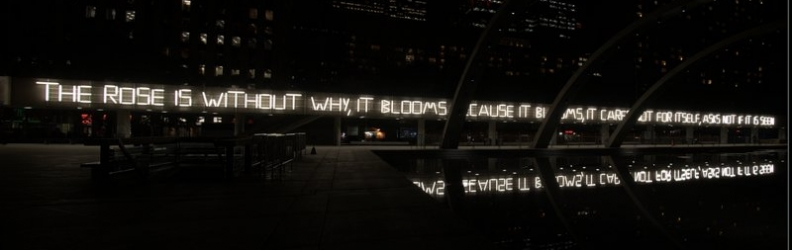 """The Rose"" Installation for Nuit Blanche"